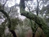 Biodiversidade na serra do Caramulo | autor: Fernanda Botelho