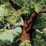 Árvores de Portugal