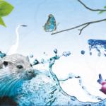 A Nossa Biodiversidade