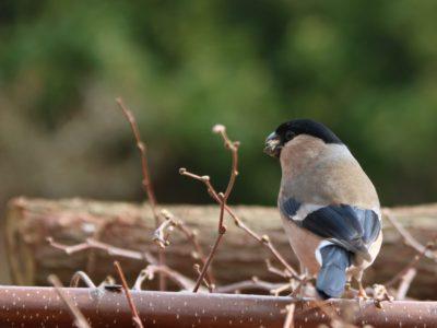 nature-branch-bird-female-wildlife-beak-644601-pxhere.com