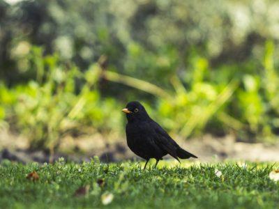 nature-bird-animal-wildlife-wild-spring-639331-pxhere.com